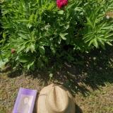 JULIE et le chapeau du jardinier ©EditionsCoryphene