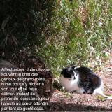Petit chat au soleil Citation ©EditionsCoryphene